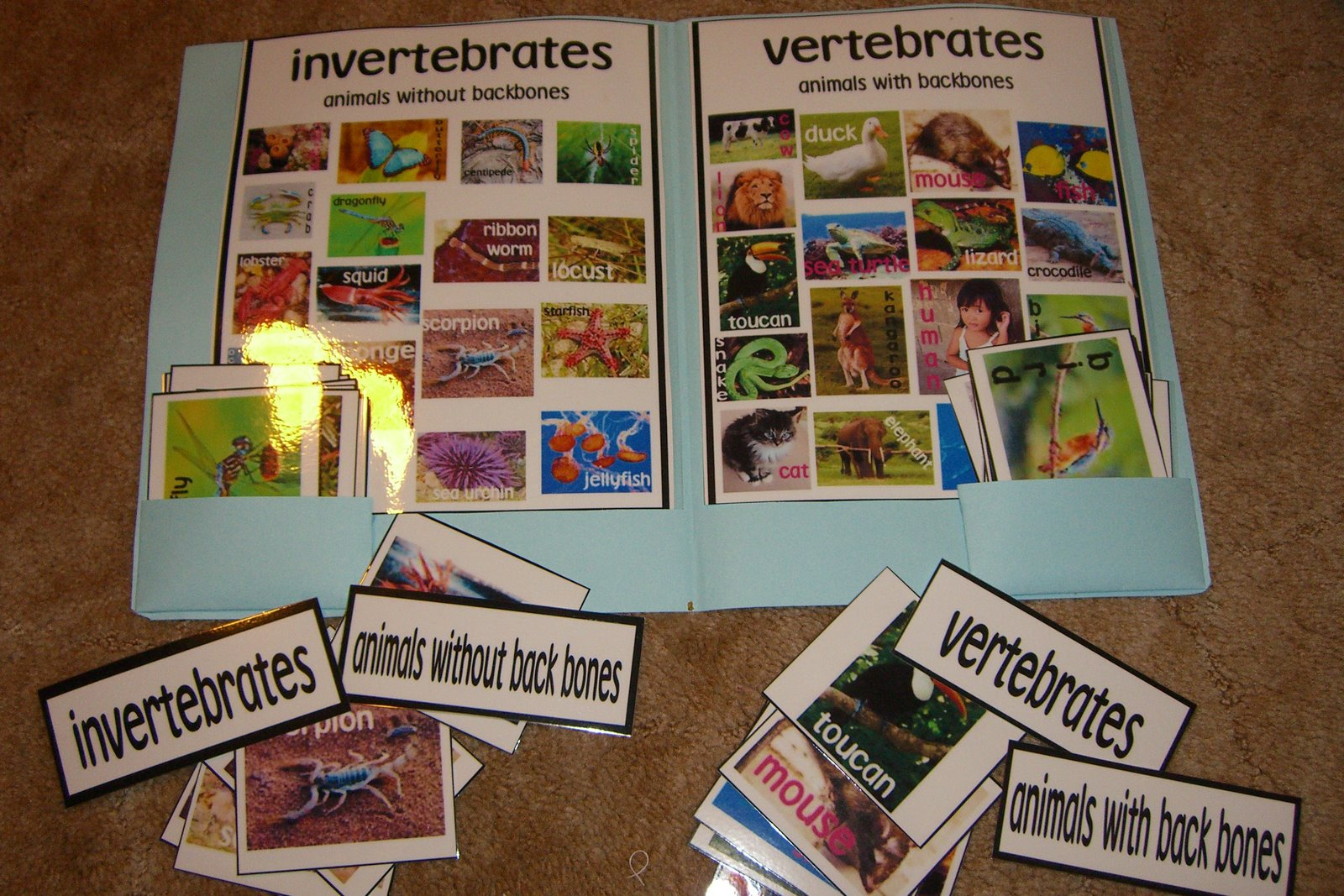 Dingoden Family Outback Yapper: Vertebrates and Invertebrates sorting cards  and activities